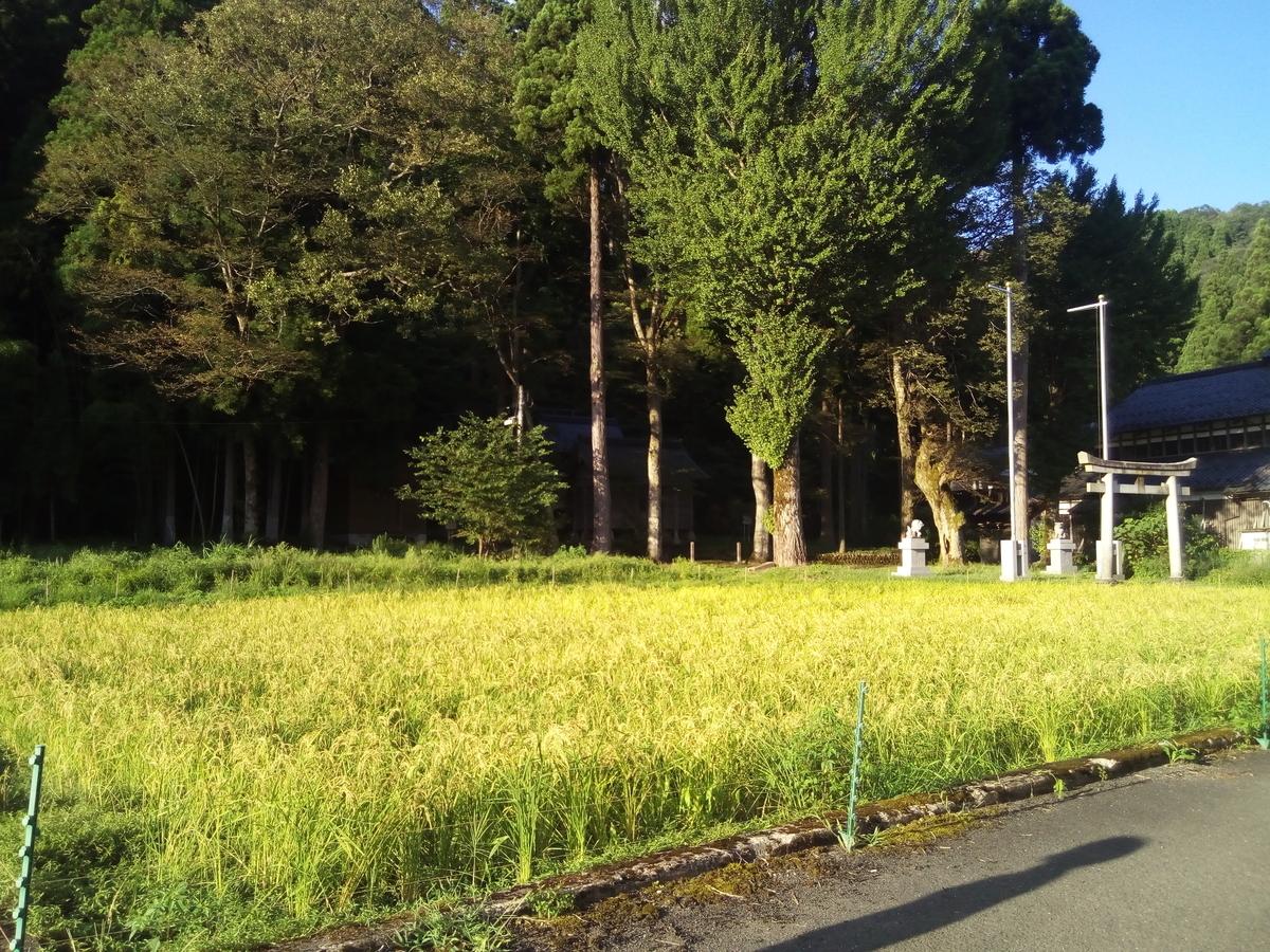 f:id:treepicnic:20200920194100j:plain