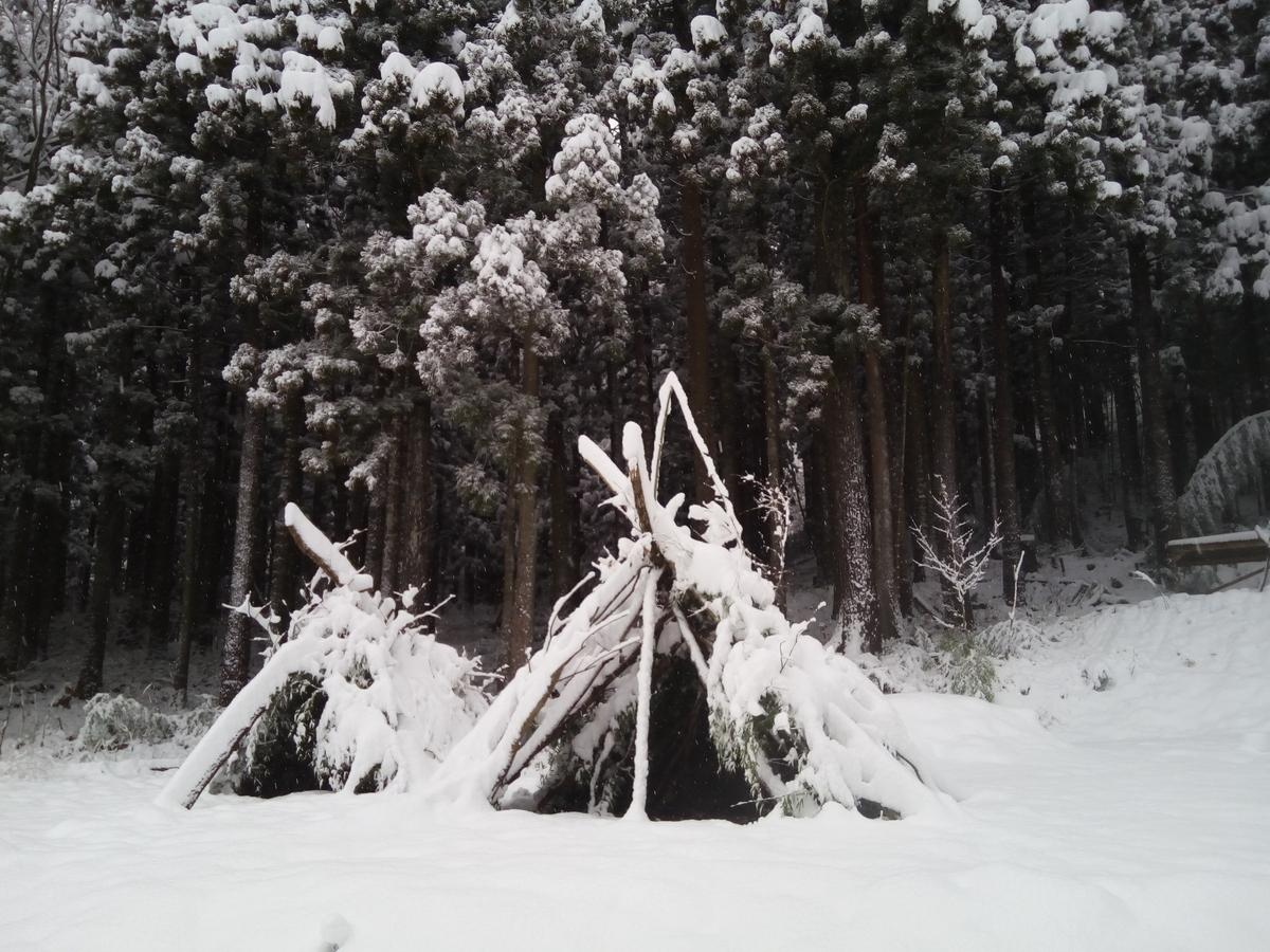 f:id:treepicnic:20201216171505j:plain