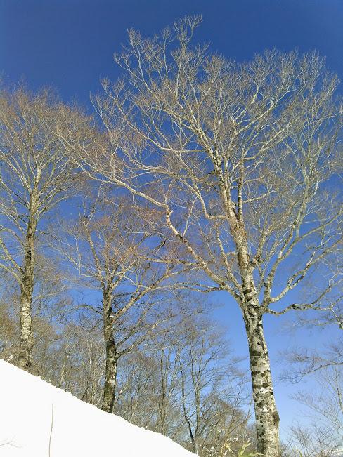 f:id:treeside:20170214000704j:plain