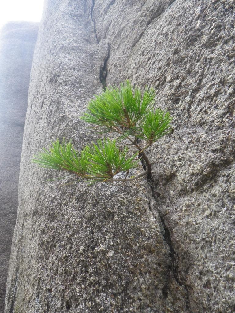 f:id:treeside:20171005092754j:plain