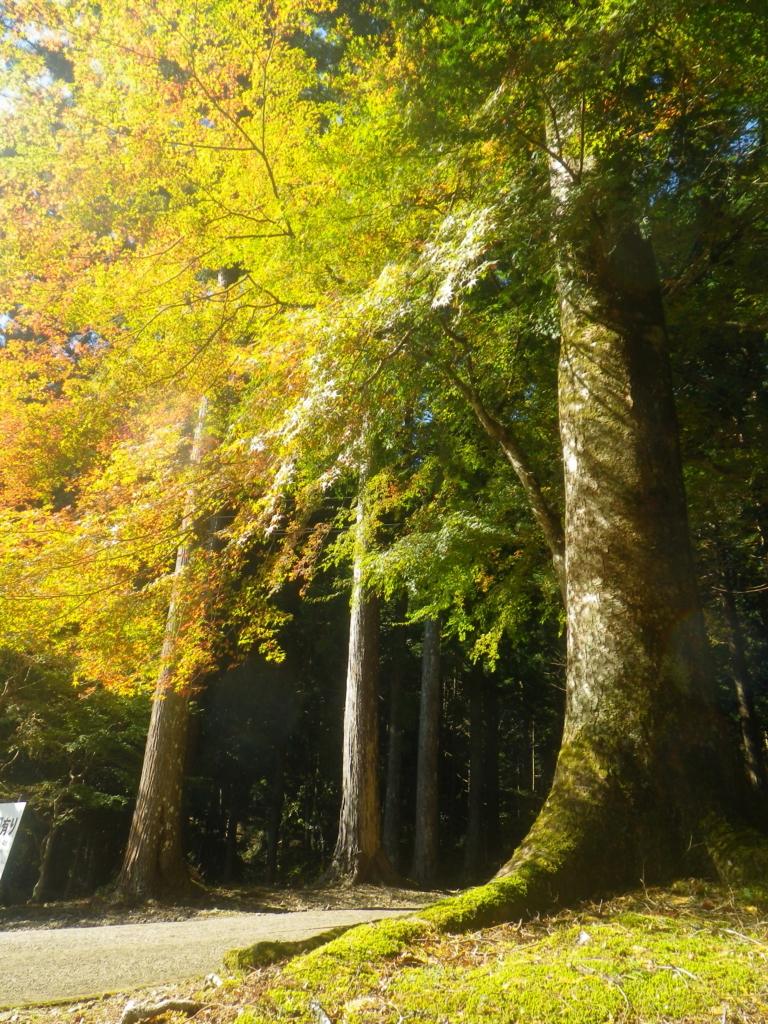 f:id:treeside:20171101115330j:plain