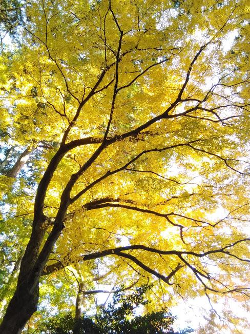 f:id:treeside:20171205232151j:plain