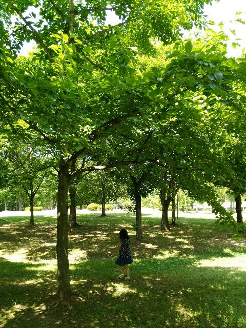f:id:treetopmama:20180624133643j:image