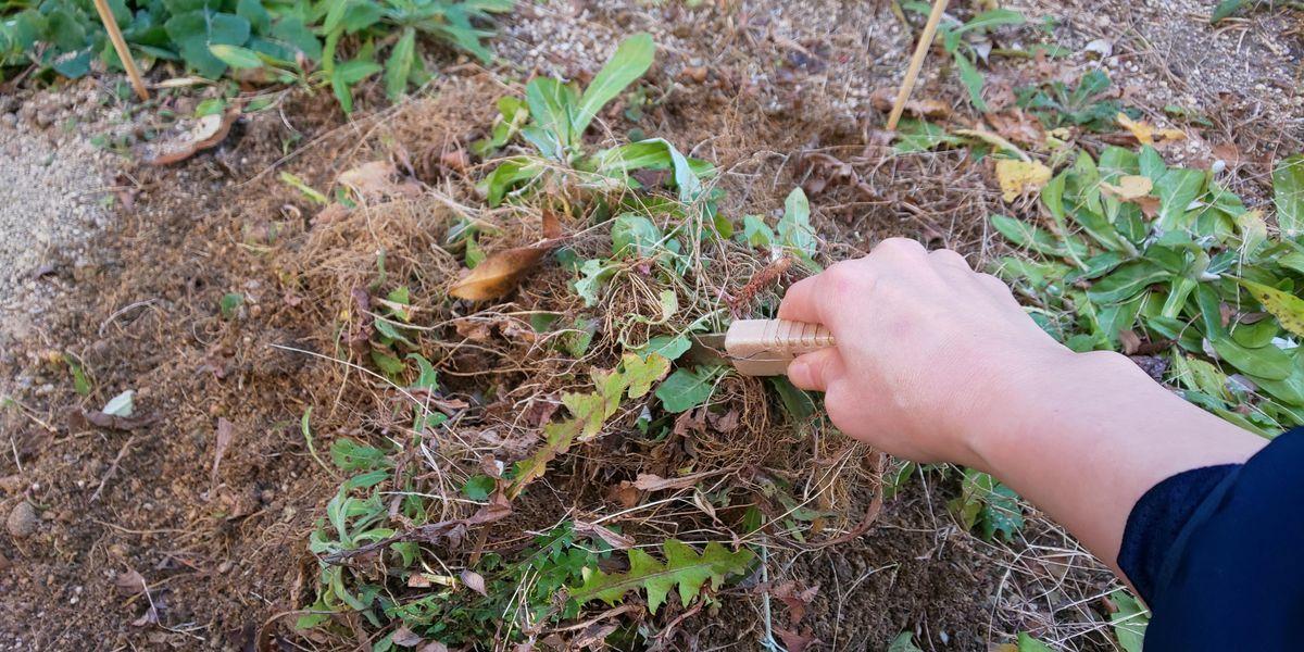 雑草 草むしり