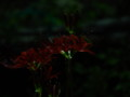 [山口の家][宇賀本郷][豊浦町][夜]