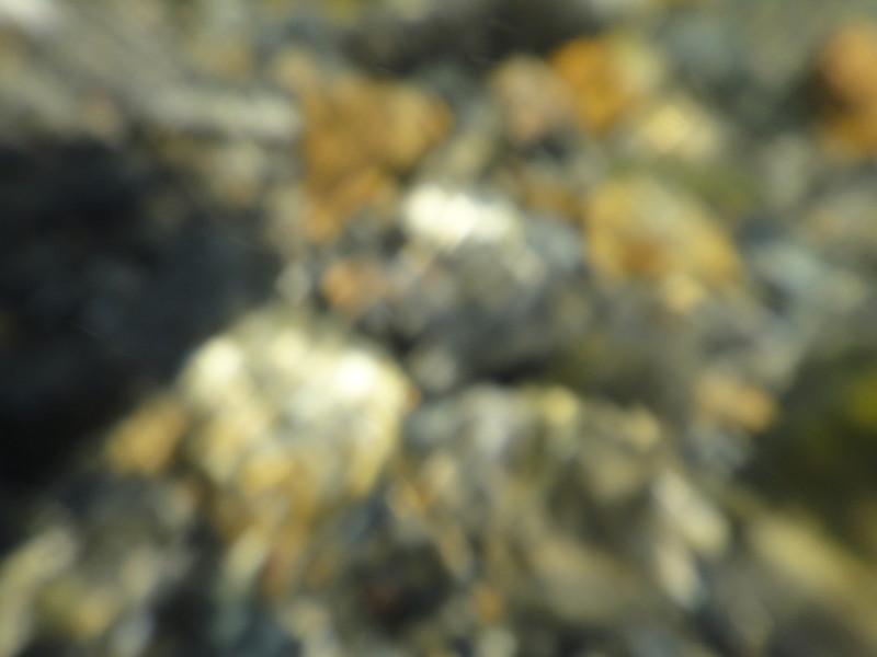 [鴨川デルタ][京都][京都市][鴨川]