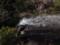 [白竜の滝][滝][福井県][南条郡][南越前町][観光][旅]
