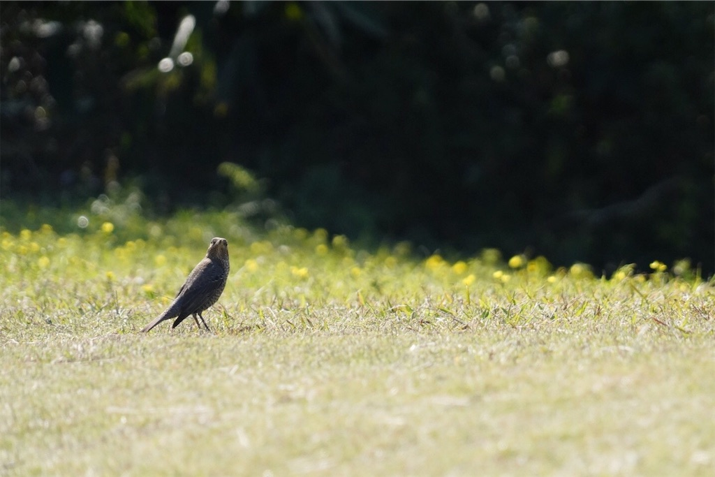 あやまる岬 鳥