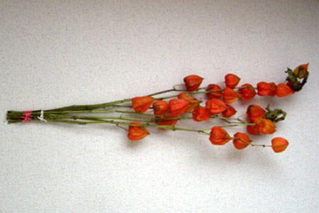 f:id:tsaito758:20101019100142j:image