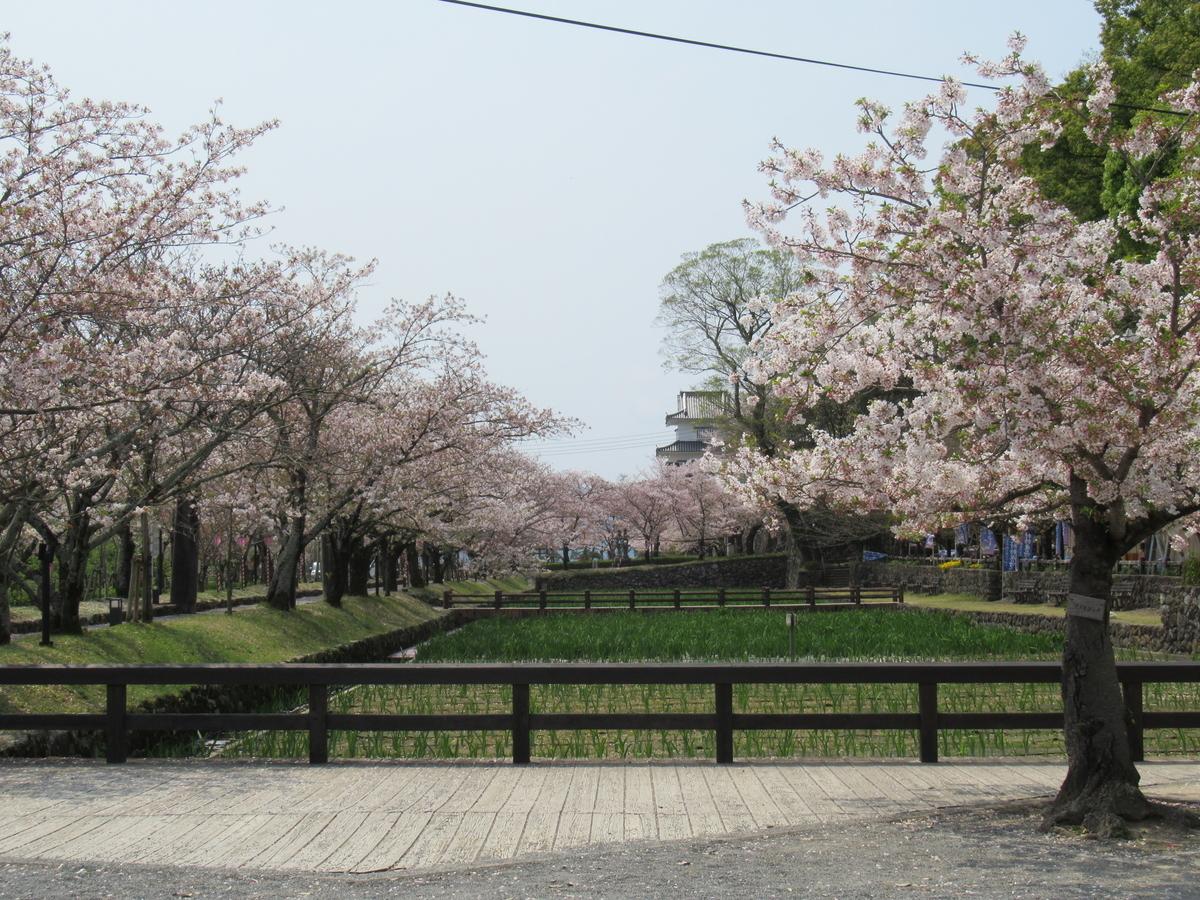 f:id:tsubaki333tan:20200506151959j:plain