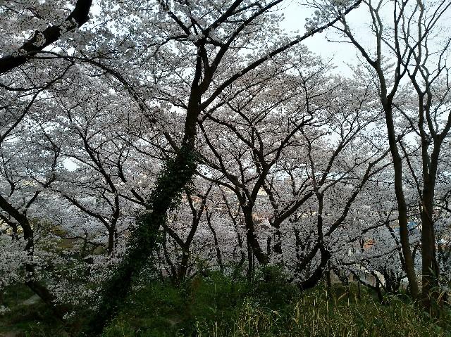 f:id:tsubakidoh:20180329231355j:plain