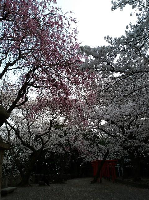 f:id:tsubakidoh:20180329231421j:image