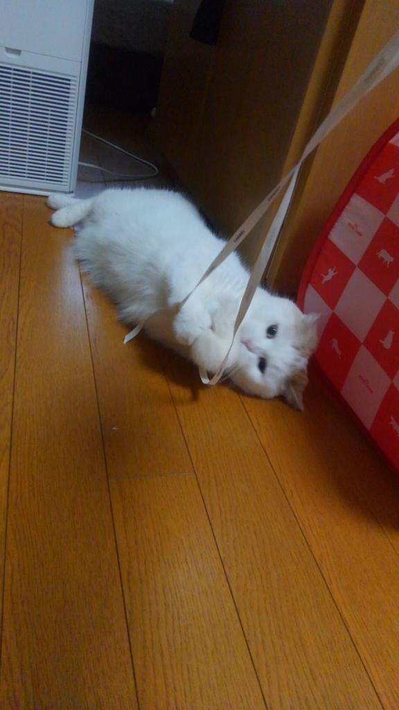 f:id:tsubakimoto_neko:20160821162909j:plain