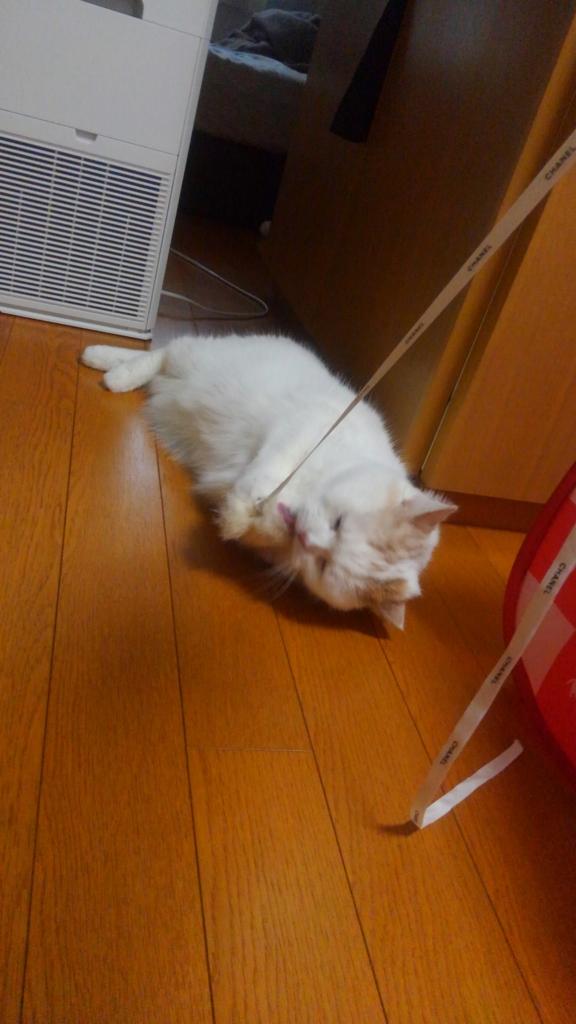 f:id:tsubakimoto_neko:20160821162937j:plain