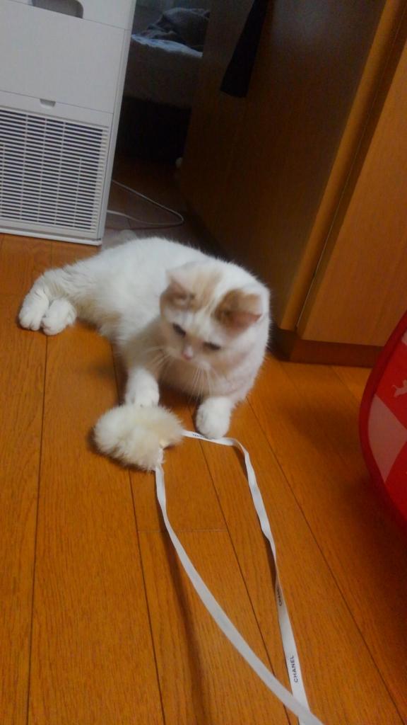 f:id:tsubakimoto_neko:20160821162954j:plain