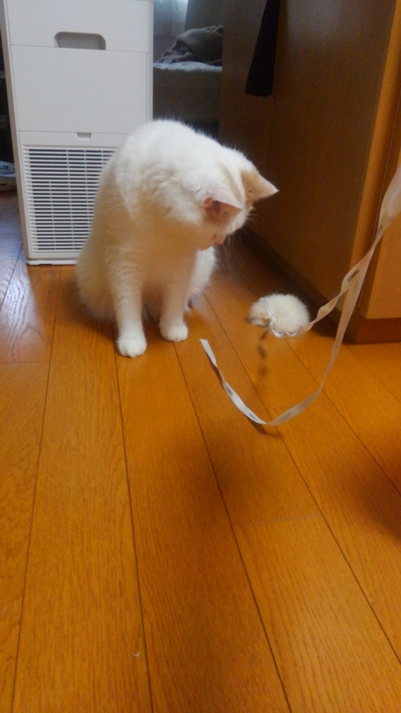 f:id:tsubakimoto_neko:20160821163015j:plain