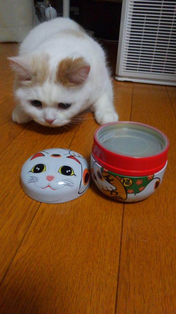 f:id:tsubakimoto_neko:20160922113358j:plain