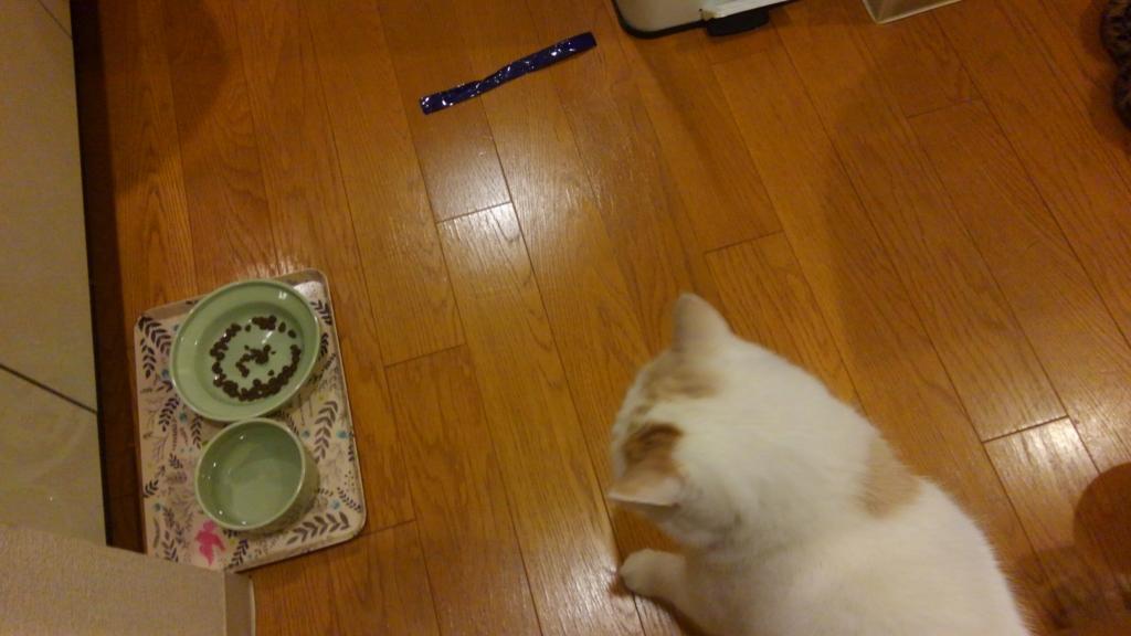 f:id:tsubakimoto_neko:20161230203141j:plain