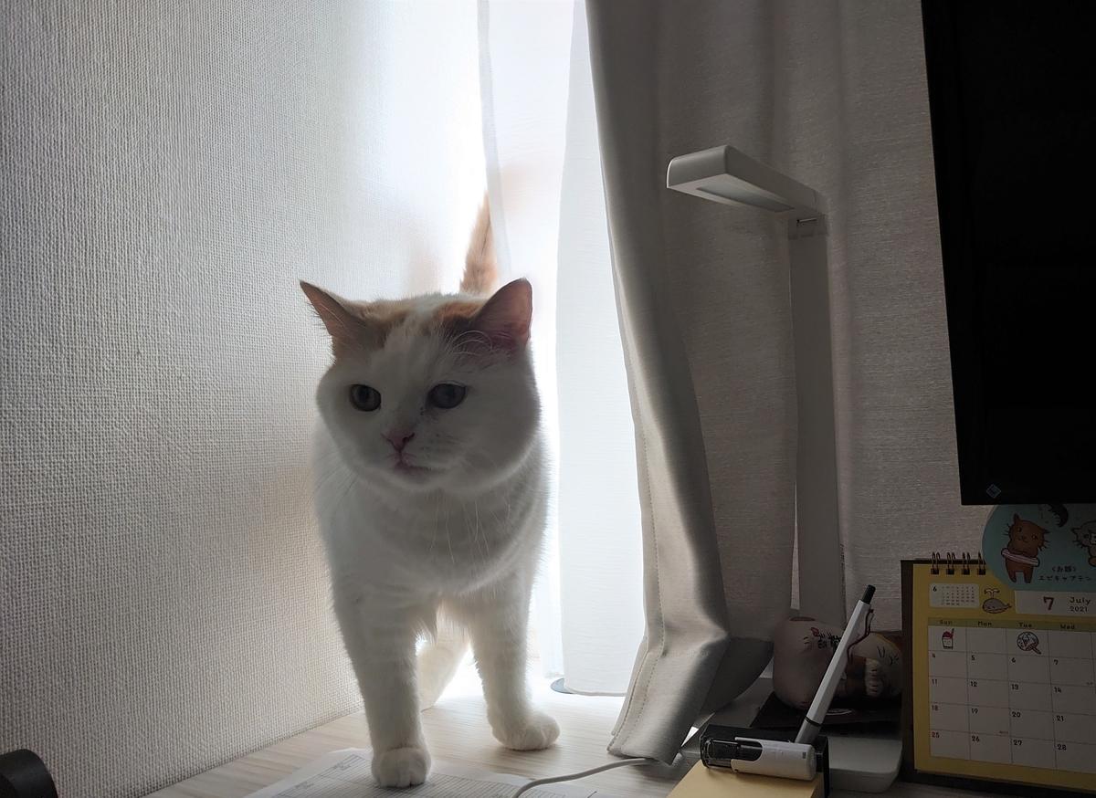 f:id:tsubakimoto_neko:20210718153607j:plain
