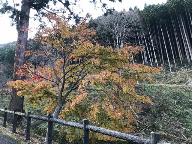 f:id:tsubara_tsubara:20171130232408j:image