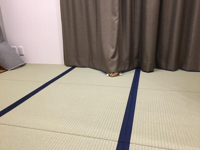 f:id:tsubasa0424:20200212151517j:plain