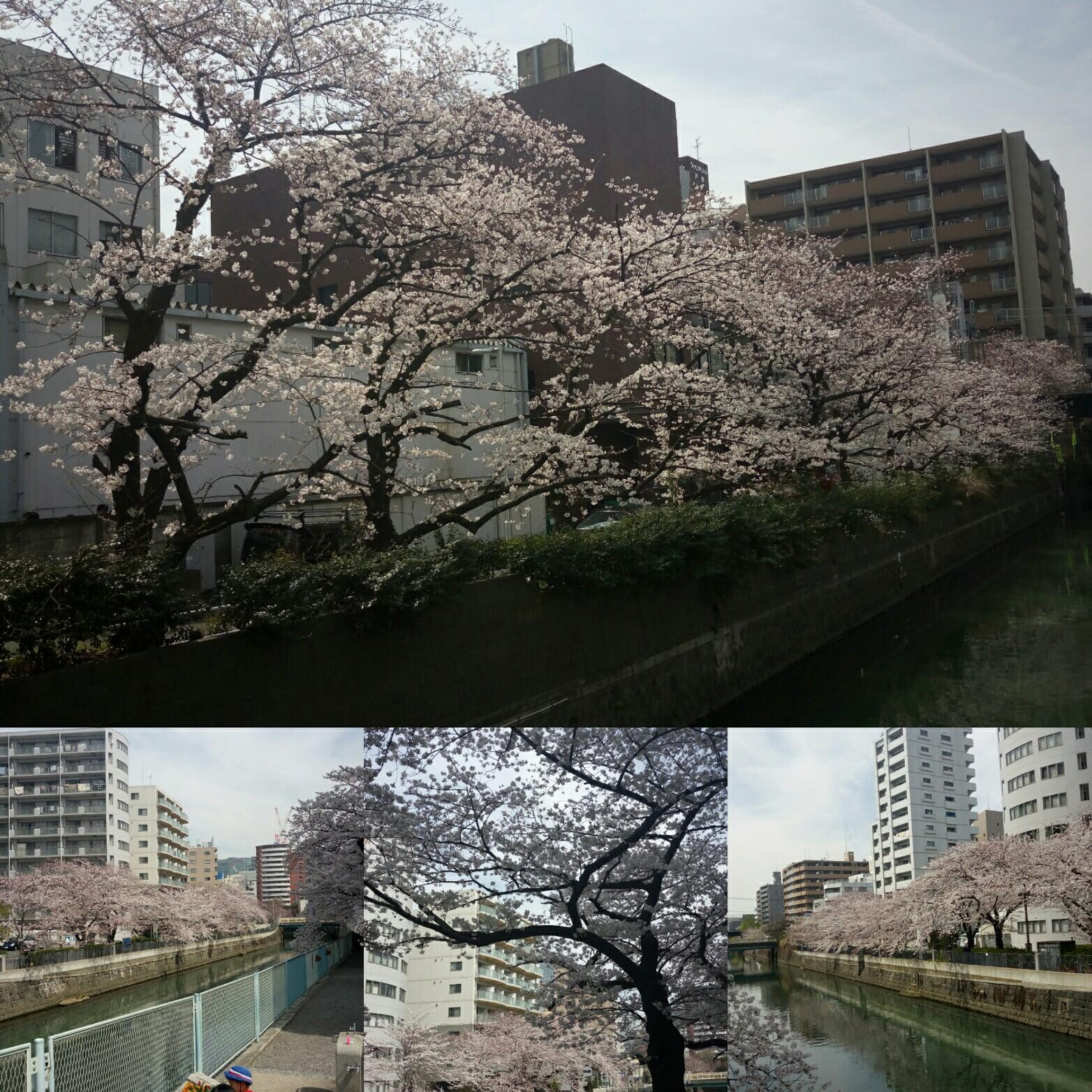 f:id:tsubasaichijo:20180327024536j:image