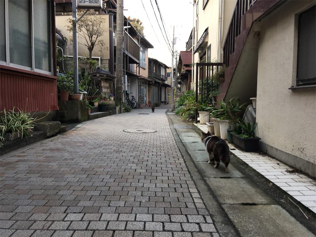 f:id:tsubasaichijo:20190327113547j:image