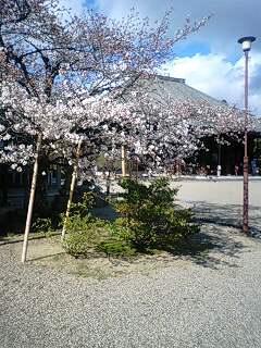 f:id:tsubosh:20100329153004j:image