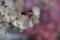2014桜その7「桜のコントラスト」