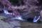 2014桜その8「まだ早いうぐい川の桜」