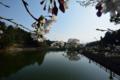 [草花]2014桜その21 「氏神様の桜」