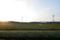 茶畑の朝3