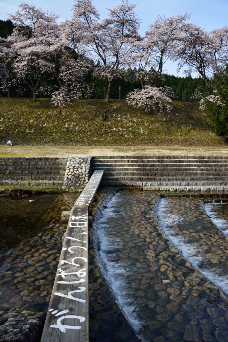 2014桜その26「うぐい川3」