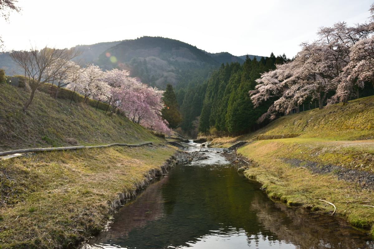 2014桜その26「うぐい川4」
