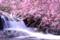 2014桜その26「うぐい川5」