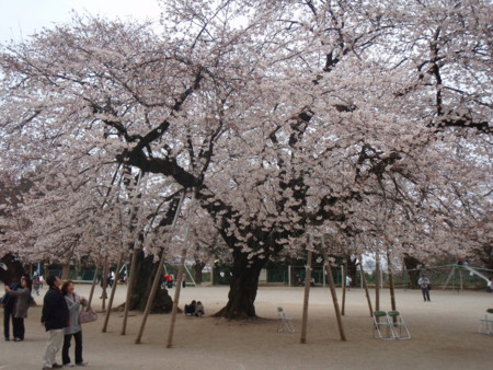 f:id:tsuchiura:20090404164907j:image