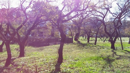 f:id:tsuchiura:20141117225818j:image