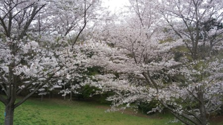 f:id:tsuchiura:20160413004754j:image
