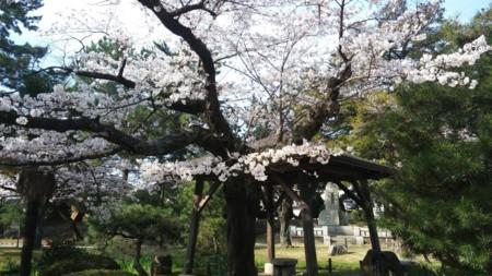 f:id:tsuchiura:20180327224709j:image
