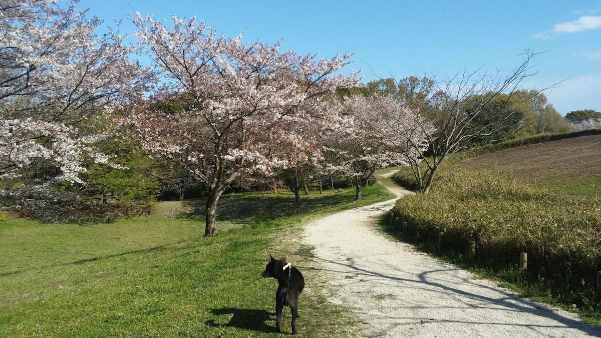 f:id:tsuchiura:20190416181655j:plain