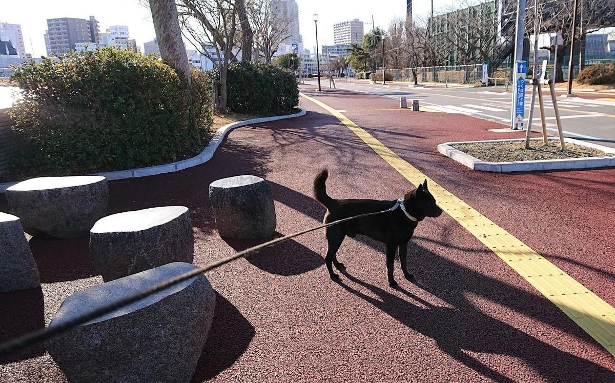 f:id:tsuchiura:20210216183216j:plain