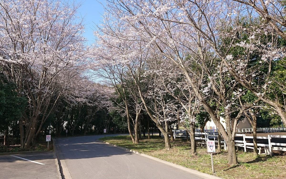 f:id:tsuchiura:20210325165758j:plain
