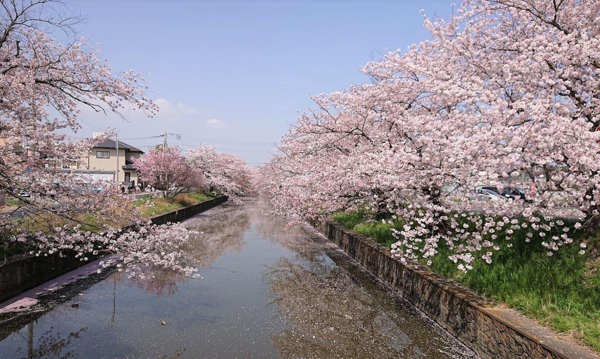 f:id:tsuchiura:20210331174533j:plain