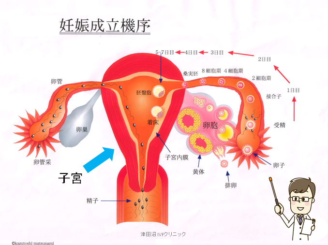 f:id:tsudanuma_ivf_clinic:20210414145641p:plain