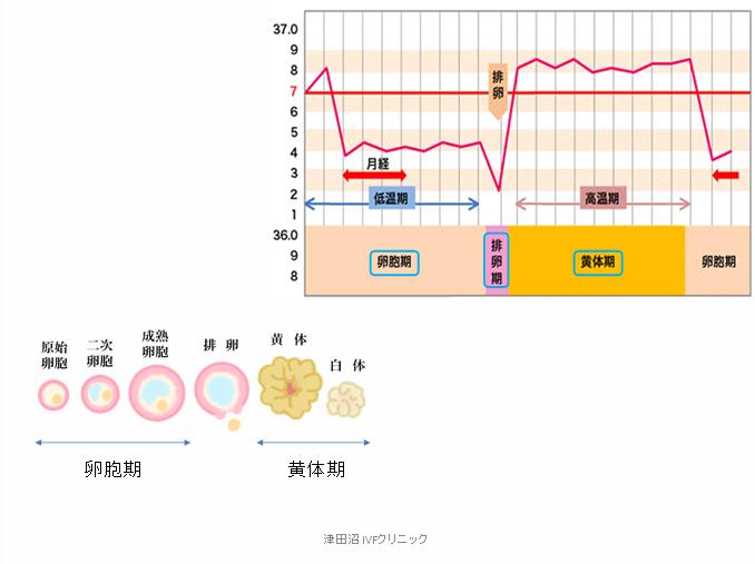f:id:tsudanuma_ivf_clinic:20210414145953p:plain