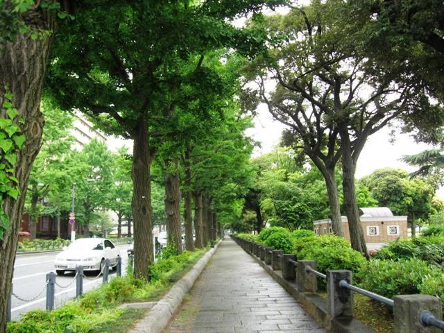 個別「山下公園通り」の写真、画...