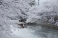 京都新聞写真コンテスト 春の疎水