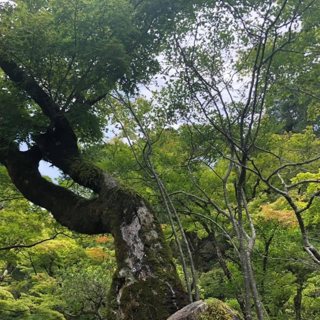 f:id:tsuji-shinkyuin:20210719075955j:image