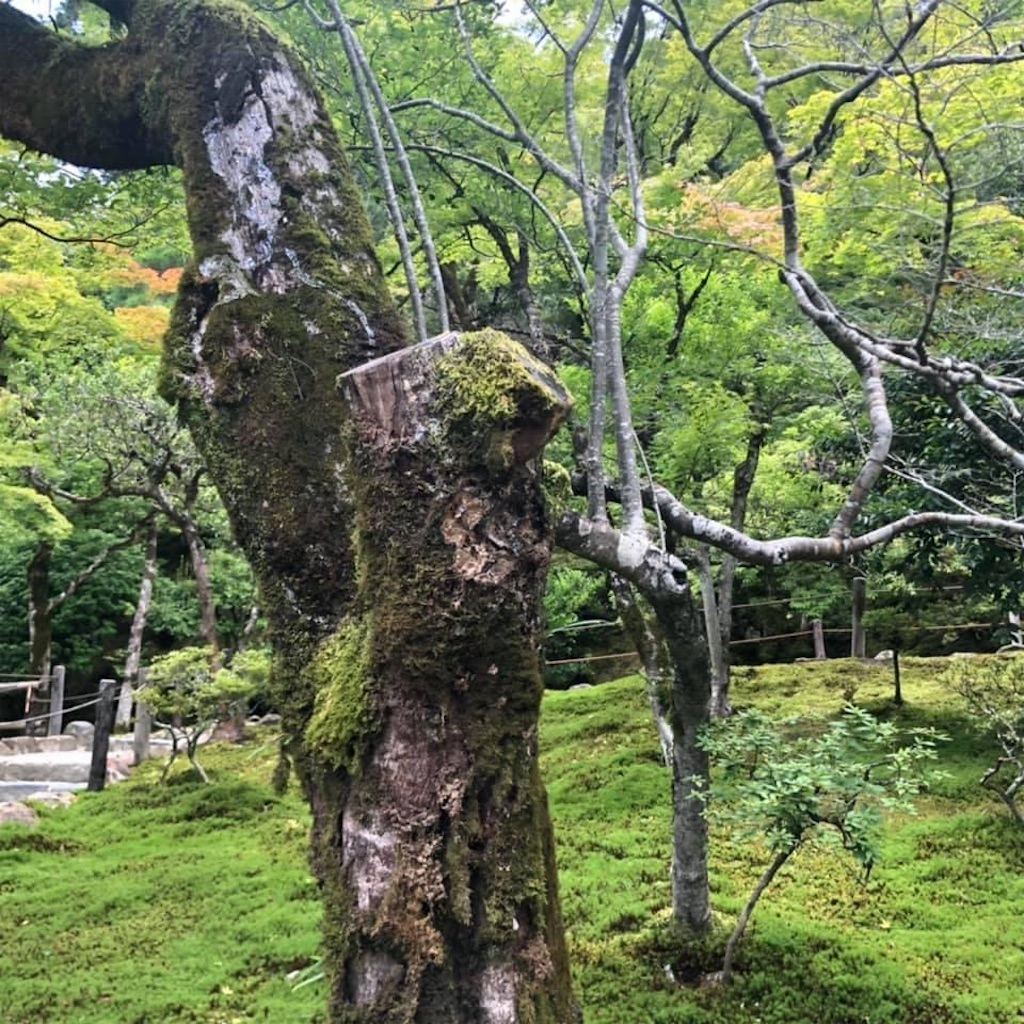 f:id:tsuji-shinkyuin:20210719080004j:image
