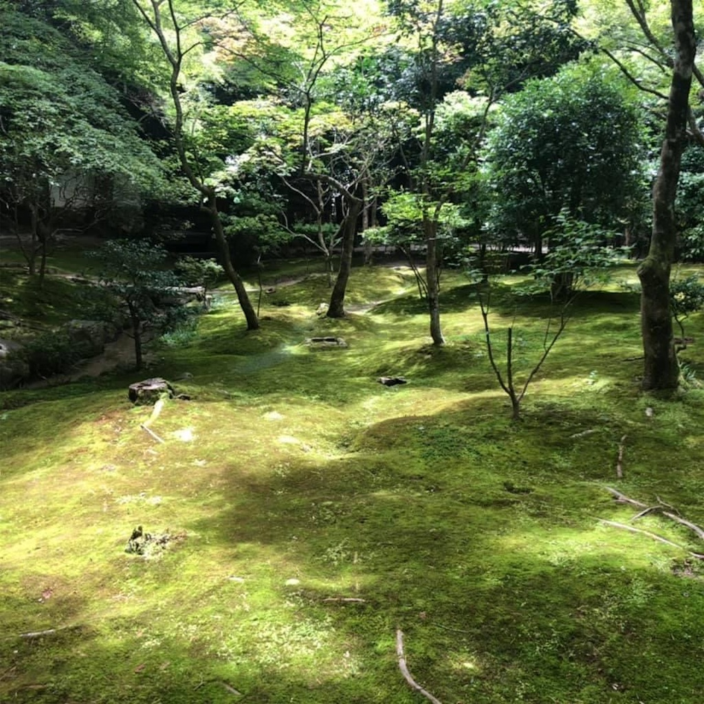 f:id:tsuji-shinkyuin:20210719080116j:image
